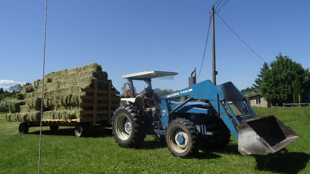 A blue tractor pulls a trailer with a tall stack of hay bales.