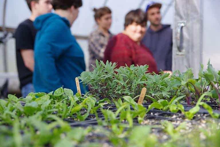 herbs greenhouse