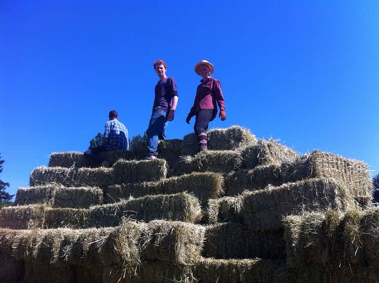Three young people stand at the top of a stack of hay bales.