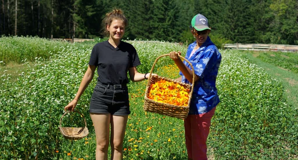 Two young women stand in a field of tall grass and flowers. They are holding baskets full of orange flower petals.